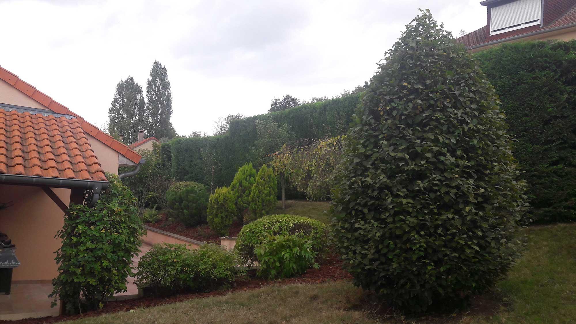 Entretien de jardin s a r l des tailles d 39 arbres for Entretien jardin mois de fevrier
