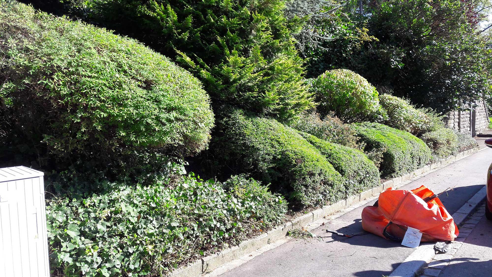 entretien d 39 un jardin s a r l des tailles d 39 arbres