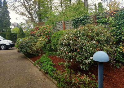 S a r l des tailles d 39 arbres grimpeur arboriste accueil for Entretien jardin 76